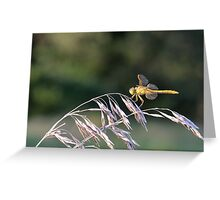 Yellow Dragon MN Greeting Card