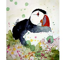 puffin on the ledge Photographic Print