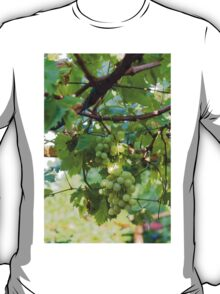 grape and vineyard in spring T-Shirt