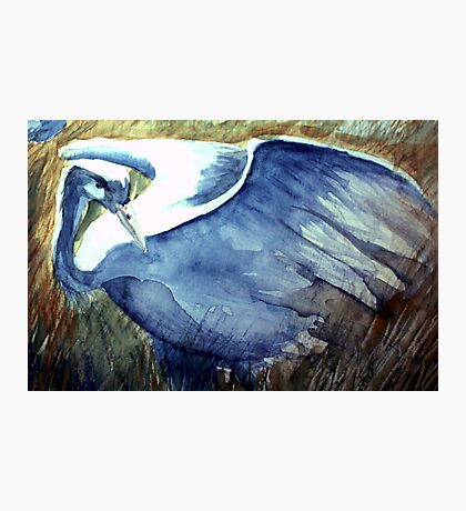 the blue crane moves with tender foot and seeing eye Photographic Print