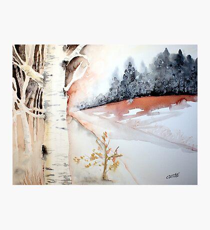 birch trees in winter Photographic Print