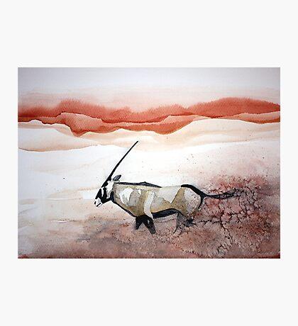 Oryx in flight Photographic Print