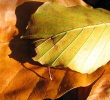 Russet Autumn Leaves - Close-up Sticker