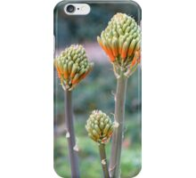 Aloes are blooming iPhone Case/Skin