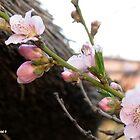 Peach tree blossoms by Elizabeth Kendall