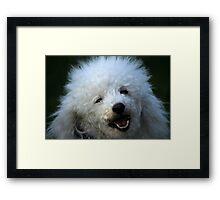 cute dog poodle Framed Print