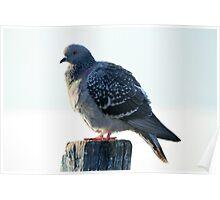 bird on lake Poster