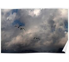 seagull fly in the sky Poster