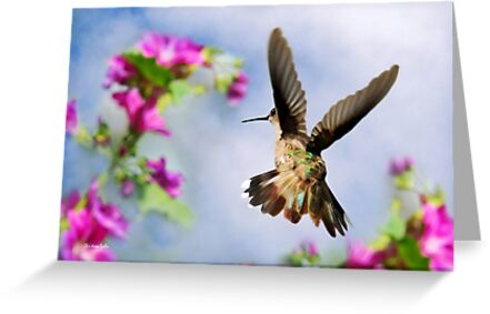 Angel Wings Hummingbird by Christina Rollo