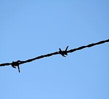barbed wire by spetenfia