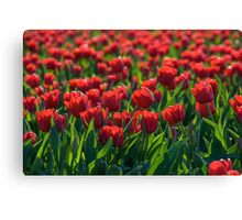 Endless Field of Red Tulips Canvas Print