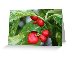 red berries in the shape of heart Greeting Card