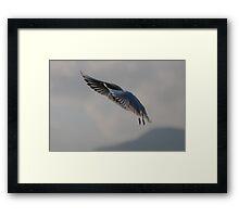 seagull on lake Framed Print