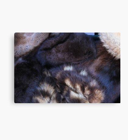 animal fur Canvas Print