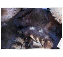 animal fur Poster