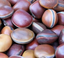 African seeds by spetenfia