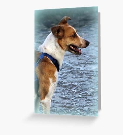 dog at lake Greeting Card