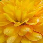 Candlelight Dahlia by Cee Neuner