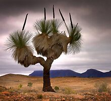The Grass Tree by Hans Kawitzki