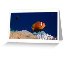 Maldivian Nemo Greeting Card