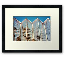 Beautiful Palm Trees In Greenhouse Framed Print