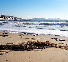 Seaweed On The Shore by Susie Peek