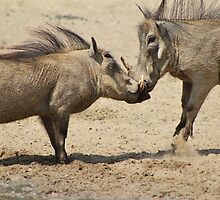 Warthog - Knockout Power from Africa by LivingWild