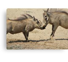 Warthog - Knockout Power from Africa Canvas Print