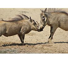 Warthog - Knockout Power from Africa Photographic Print