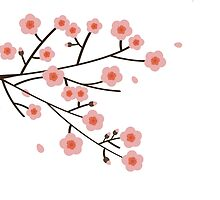 Pink Cherry Blossoms by Anaa