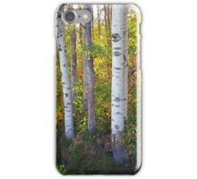 Birch Beauty iPhone Case/Skin
