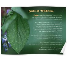 Herbs as Medicines Sage Poster