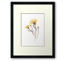 Aster  Floral Watercolor Painting Yellow Flower Nursery Illustration Framed Print