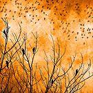 Orange Bird Scarf by debsrockine