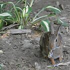 Who's eating the hostas? by Karen Checca