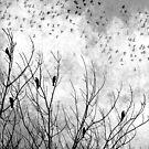 Grey Bird Scarf by debsrockine