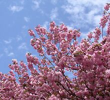Pink Flowering Tree in Springtime by GeminiMoon