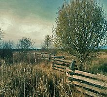 Fence Line by Lesliebc