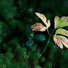 Moss and Leaves by Angelika  Vogel