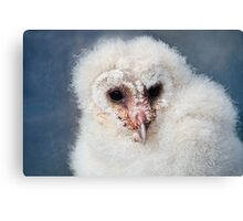 Breeze The Barn Owl Chick Canvas Print