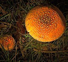 Some Mushrooms In The Morning! by Thom Zehrfeld