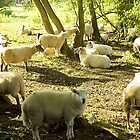 Flock gossip by missmoneypenny