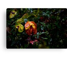 Drenched by Hurricane Matthew Canvas Print