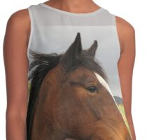 Mr Horse. Contrast Tank