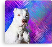 White American Pit Bull Terrier Dog Metal Print