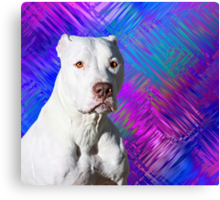 White American Pit Bull Terrier Dog Canvas Print