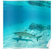 Tahiti Reef Shark & Coral Poster