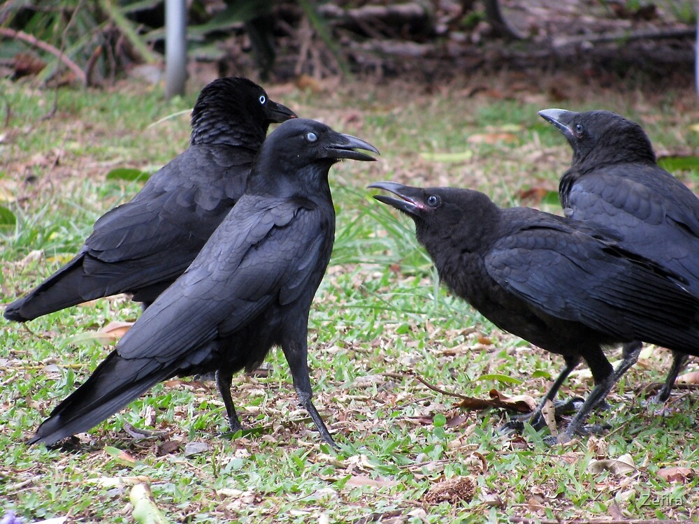 meet the Crow family by Zefira