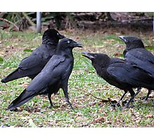 meet the Crow family Photographic Print