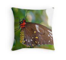 Lady Birdwing Throw Pillow